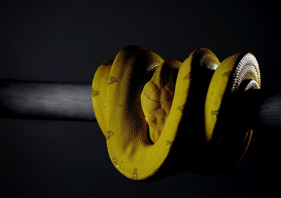 snake ヘビ
