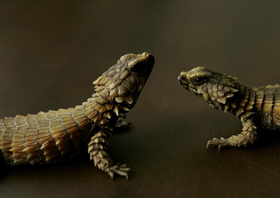 lizard トカゲ